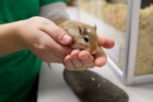 Luonnovara-alan opiskelija ja hiiri