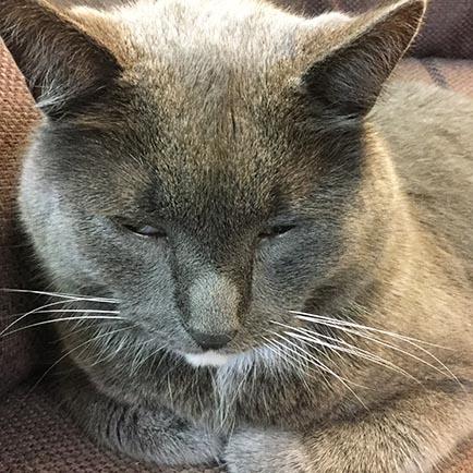 Kissa silmät puoliksi kiinni
