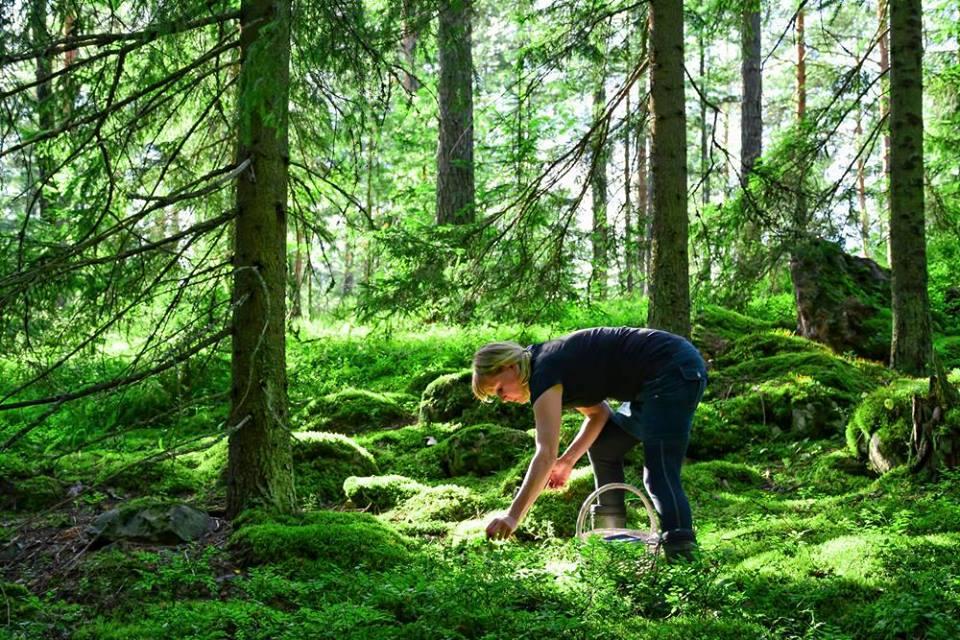 Nainen kerää maasta marjoja koriin vihreässä metsässä.