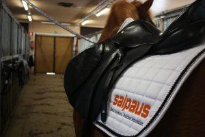 Hevonen ja satula