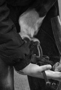 Kavio kenkä ja ihmisen käsi