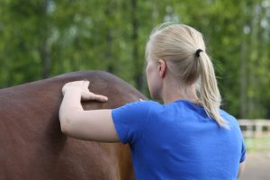 Nainen hieroo hevosen selkää