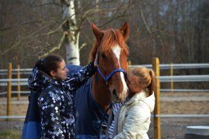 Hevonen ja kaksi opiskelijaa