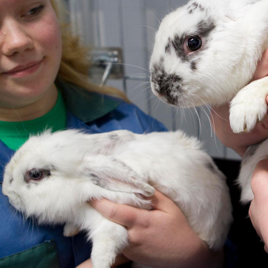 Eläintenhoitajaopiskelijat kanien kanssa.