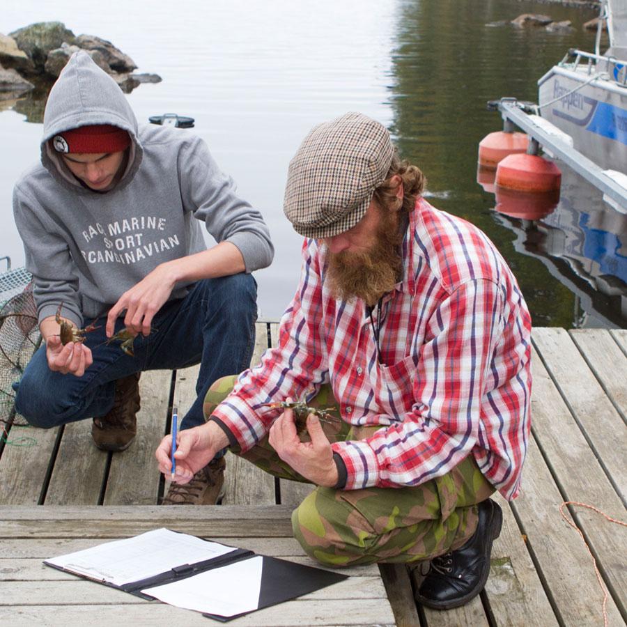 Kalastuksenohjaajaopiskelijat mittaavat rapuja.