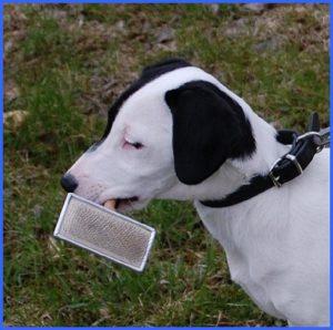 Koira harja suussa