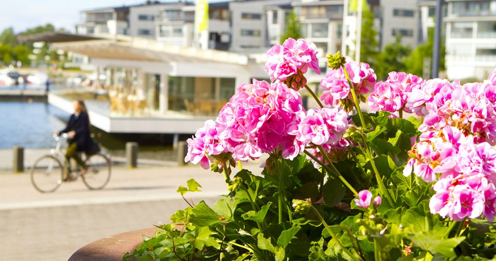 Kesäinen päivä Satamassa: pyöräilijä polkee ja punaiset kukat kukkivat.
