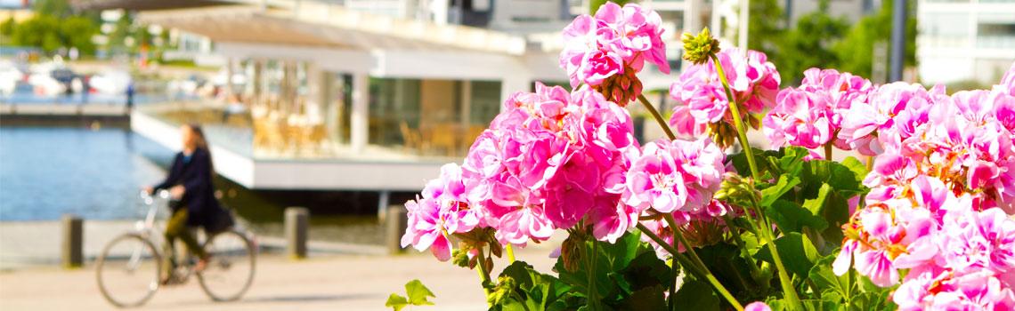 Kesää Lahden satamassa, pyöräilijä ja kukkasia.