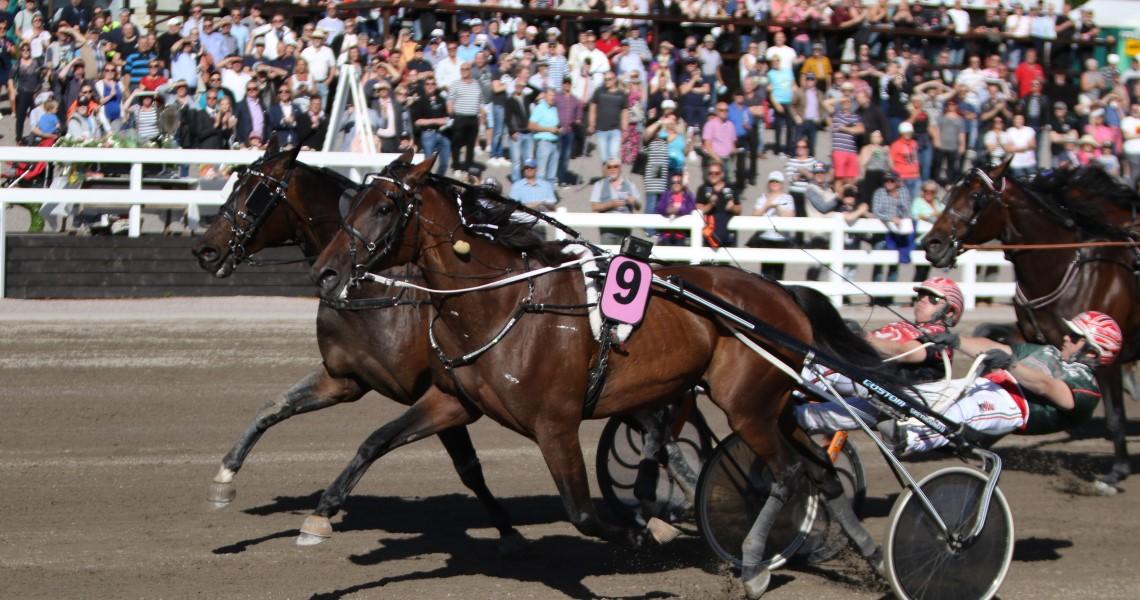 """""""kaksi hevosta juoksee ravikilpailussa, taustalla näkyy yleisöä"""""""