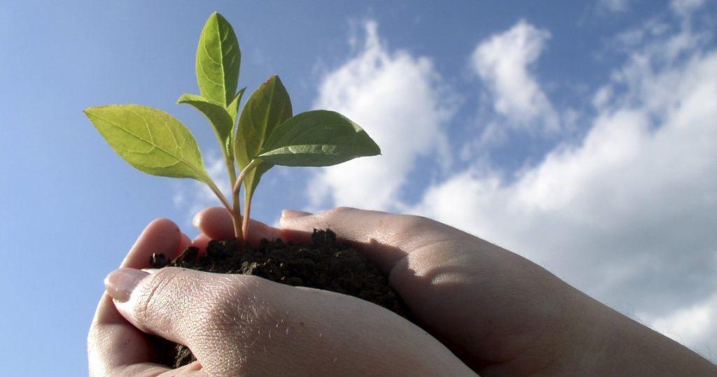 käsissä mullasta kasvava taimi