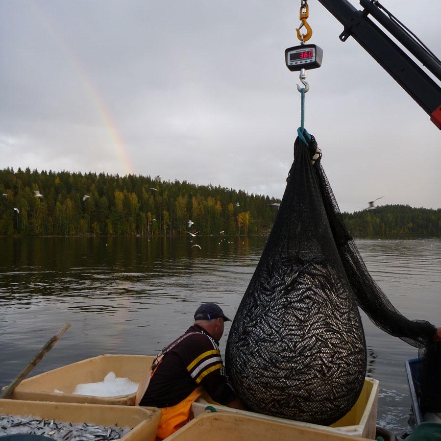 Kalastaja nostaa verkkoja järvestä.