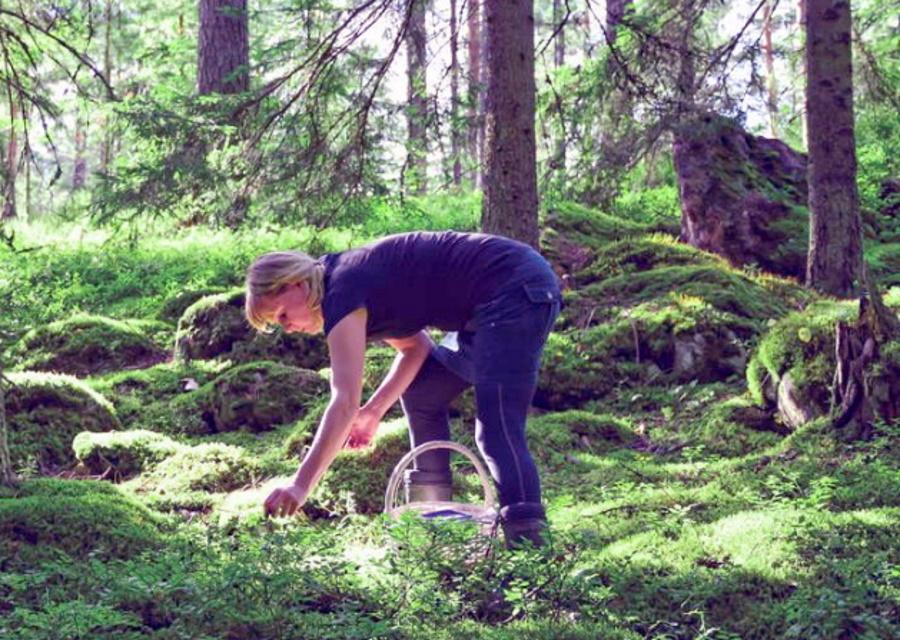 Horta-ohjaaja keräilemässä villiyrttejä metsästä.